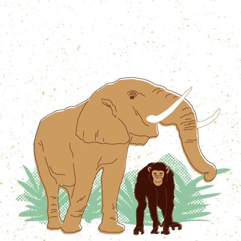 Visuel éléphant et chimpanzé pour la vidéo 1 du dossier FNE cacao