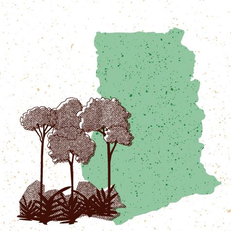 Visuel arbres et carte du Ghana pour la vidéo 2 du dossier FNE cacao